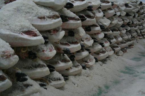 Proceso de salazón del jamón ibérico